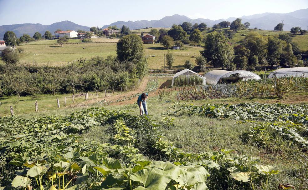 La producción ecológica gana terreno