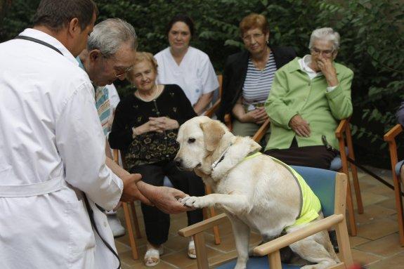 Un perro durante un taller terapéutico en el centro de día de la Casa del Mar. /